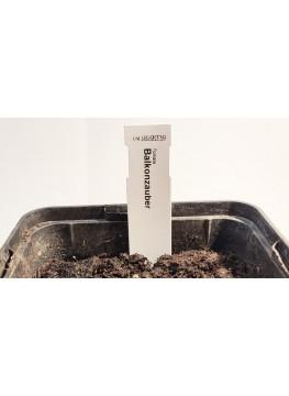 Aussaat-Stecketikette ohne QR-Barcode (1,7 x 8 cm)